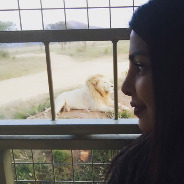 Priyanka Chopra comes face to face with a lion!