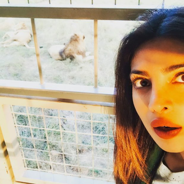 Priyanka Chopra comes face to face with a lion1