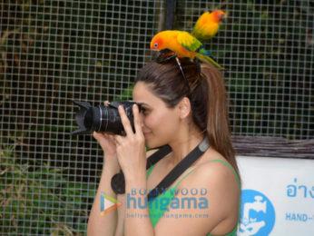 Daisy Shah snapped visiting the Bangkok Zoo