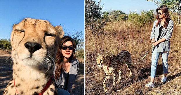Kriti Sanon gets massively trolled over Cheetah posts; actress RESPONDS!
