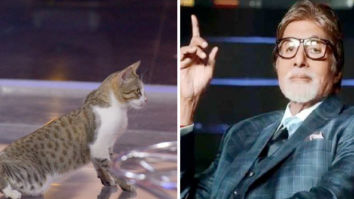 Cat gate-crashes Amitabh Bachchan's KBC sets, chills like a boss; see photo