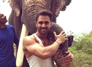 Pulkit Samrat bonds with his co-star, Unni the elephant, on the sets of Haathi Mere Saathi