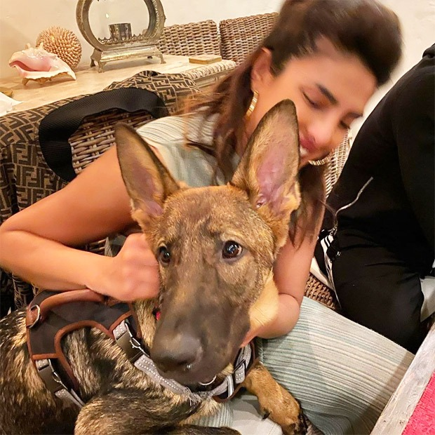 Amid Coronavirus outbreaks, Priyanka Chopra chills her time at home with some serious cuddle therapy