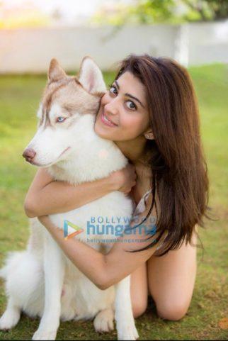 Celebrity Photo of Pranitha Subhash