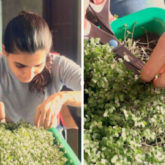 Samantha Akkineni shares results of her first harvest of cabbage microgreens