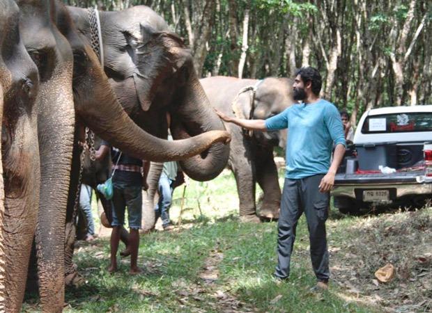 Rana Daggubati shares how the Elephants helped him perform on the sets of Haathi Mere Saathi